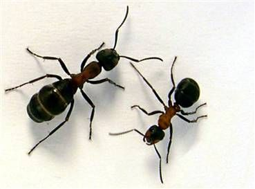 24++ Black ants in kitchen ideas in 2021