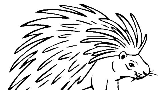 Porcupine Coloring Page Coloring Pages For Kids Animal Coloring Pages Coloring Pages