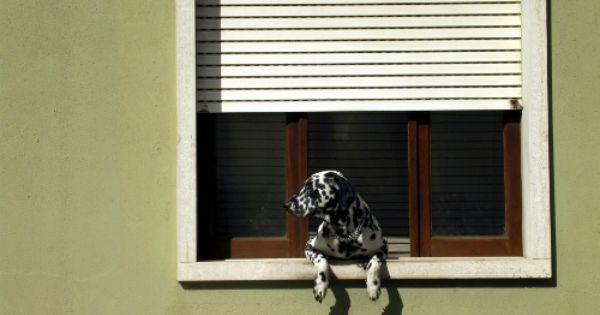 Petsmart Coupon Codes Coupon Codes Hd Wallpaper Dalmatian