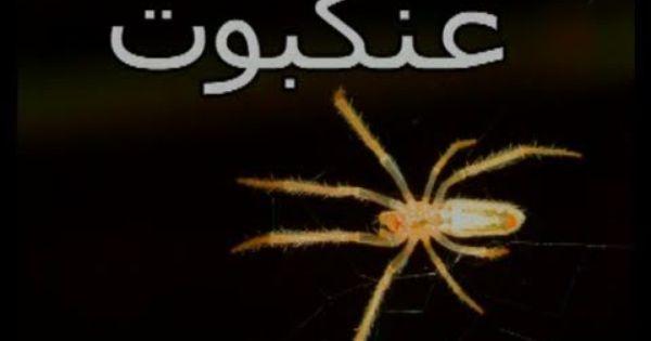 Itsy Bitsy Spider In Arabic Teach Children Arabic Nursery Rhymes Nursery Rhymes Teaching Kids Teaching