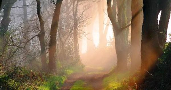 Godolphin woods Cornwall England beautiful light in this pic
