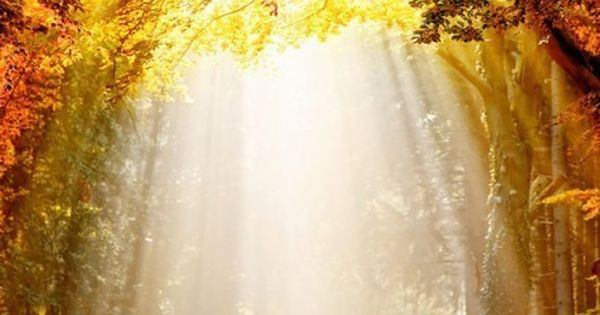 For me, light shining through the trees looks beautiful and magical. Natural