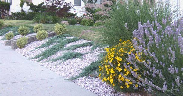 Shrubs Planted On A Slope Ground Hugging Blue Rug