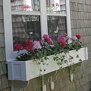 Cape Cod Cottage Window Boxes In Maine Window Box Flowers Window Planters Window Box