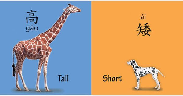 Learning A Pair Of Antonym Via A Picture 高 Vs 矮 高 Adj Tall 矮 Adj Short 高矮 Height E G The Two Trees Are About The Same Height 这两棵树高矮差不多 Zhe Liǎng