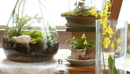 Top Plants for Terrariums . Terrariums and miniature gardens are popular but
