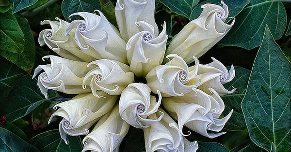 A Moon Flower bouquet