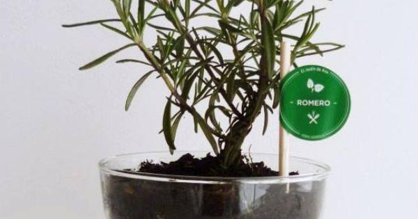 Planta Aromatica, Romero. Jardin de Ana  Vivero  Pinterest