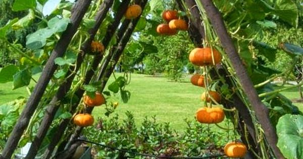 10 Simple Gardening Ideas Awesome Pumpkins And Gardening