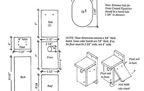 plans for tree swallow nest box i love animals