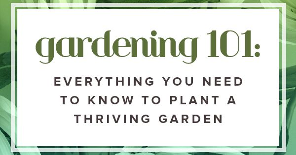 Gardening 101 everything you need to know to plant a for Gardening tools you need