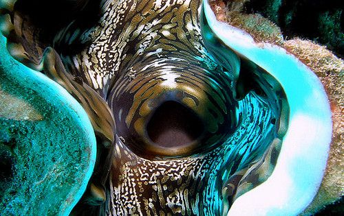 Giant clam -by Anel Van Veelen