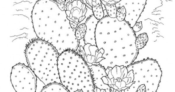 prickly pear cactus coloring page | super coloring | flori ... - Prickly Pear Cactus Coloring Page