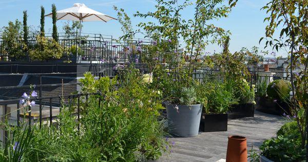Un jardin de fleurs sur le toit d 39 un appartement plant for Un jardin de fleurs