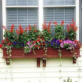Red Window Flower Box With Tall Scarlett Sage Flowers Window Box