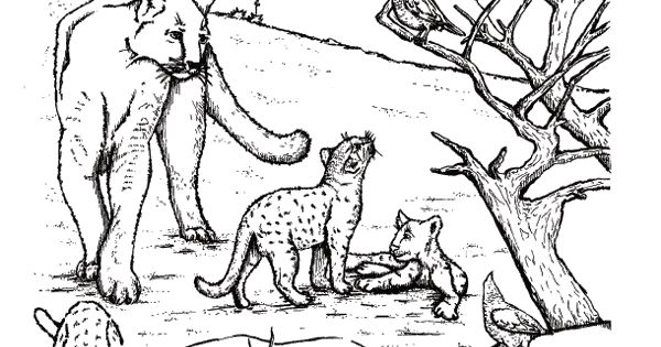 West Texas Mountain Lions On Realistic Animals Coloring