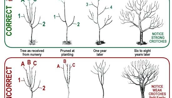 Pruning Fruit Trees... and other tips for maintaining garden trees