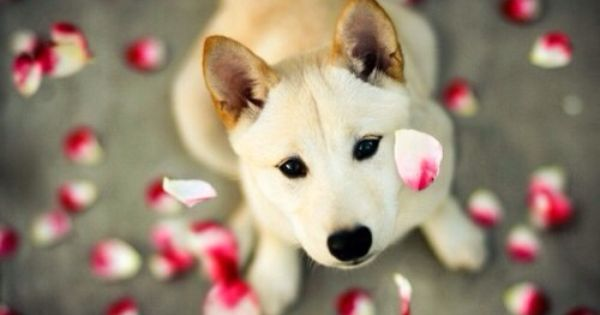 Dog With Flower Petals Cute Dog Pictures Cute Dog Wallpaper