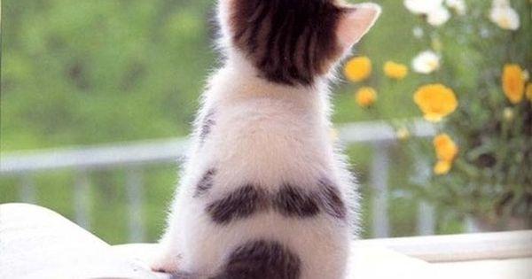 sweet baby kitty