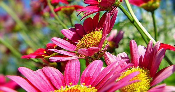 Sunny Sunny Beautiful Flowers| http://beautifulflowerscollections727.blogspot.com