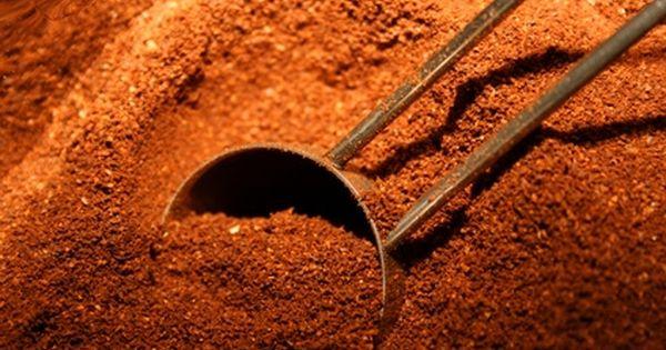 Plants Shrubs That Like Coffee Grounds Uses For Coffee Grounds Coffee Grounds Plants