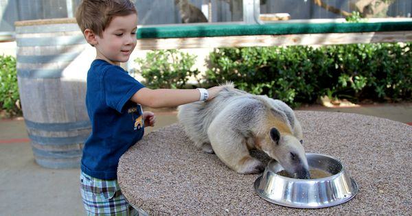 Why Animal Lovers Love The San Diego Zoo Safari Park San Diego