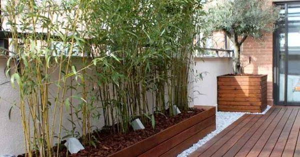 sichtschutz balkon bambuspflanzen holz terrasse verglasung baeume terrasse garten pinterest. Black Bedroom Furniture Sets. Home Design Ideas