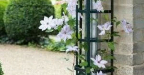 hide downspouts with climbing vine on a trellis house pinterest climbing vines. Black Bedroom Furniture Sets. Home Design Ideas