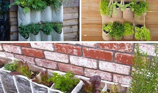 24 opciones para jardines verticales plantas y jard n - Plantas para jardines verticales ...