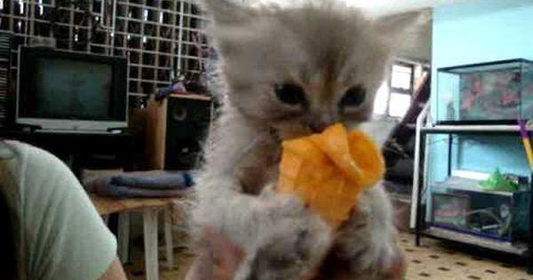 Watch Adorable Kitten Eats Ice Cream Kittens Funny Cute Animals Kittens