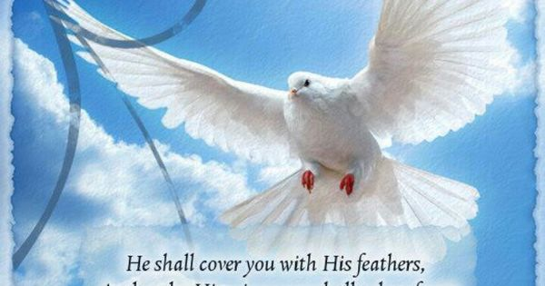 he shall cover you with his feathers