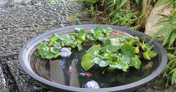 Water Bowl Garden Fish Pond Container Water Gardens Small Water Gardens Water Garden