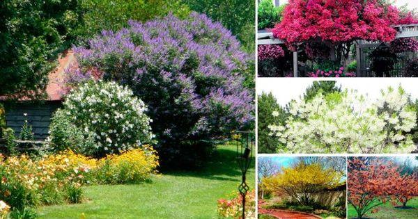 10 rboles para jardines peque os flores y jardines for Arboles para jardines pequenos