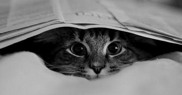 Mr. Doofus peek a boo kitten