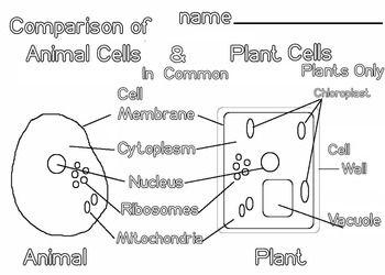 Animal And Plant Cells 5 Pages Scientific Diagram Vocab Steam