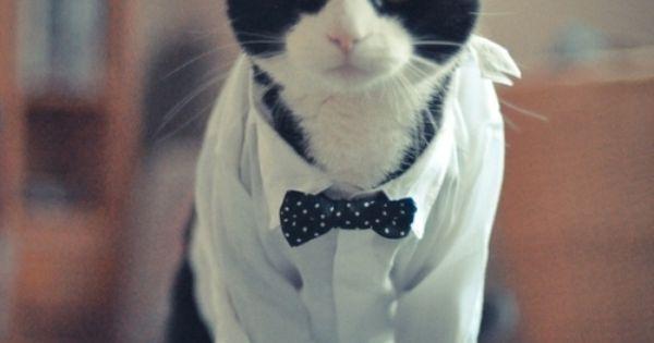 Tuxedo cat with Bowtie(^∇^)