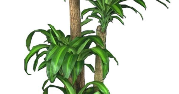 Low light plants indoor plants house plants house plants pinterest low light plants and - House plant low light ...