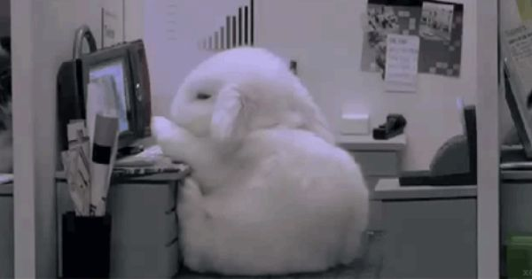 Bored Work Bunny Cute Gif Funny Cute Funny Pictures