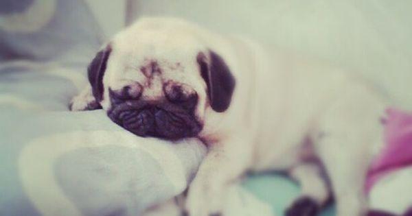 goshhhh, too cute. Pug LOVE!