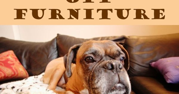 how to keep dogs off furniture