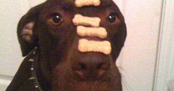 self control - level: expert What a GOOD puppy!! :-)