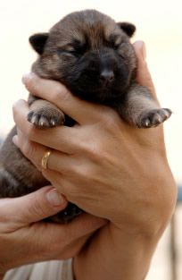When Do Puppies Open Their Eyes Dog Articles Puplistings Com Puppies Puppy Eyes Dogs