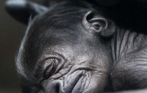 tender baby animal