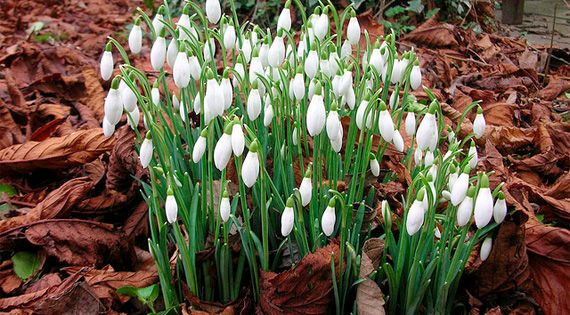 Not all plants hibernate in the winter, some flourish. Here are 9