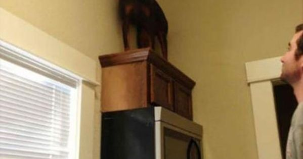 Funny Animals Of The Day - 25 Pics. Doberman