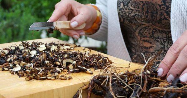 beinwellsalbe herstellen herbalist pinterest. Black Bedroom Furniture Sets. Home Design Ideas