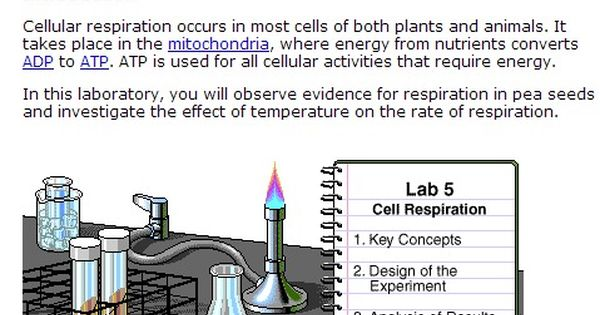 Cellular Respiration Is The Process Where Solar Energy