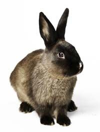 Rabbits Long Haired Rabbits Rabbit Breeds Pet Rabbit