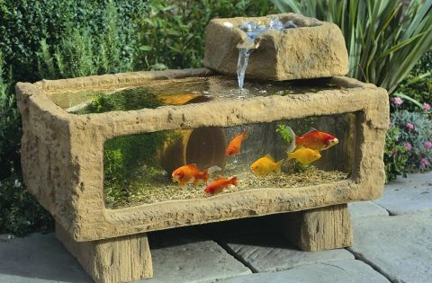 Outdoor aquarium / fish tank