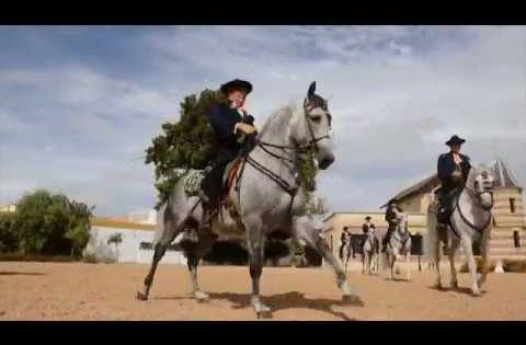 Ecos Del Rocio Soy Andaluz Una Nueva Vida Andalucía Alborada Flamenca Andaluces